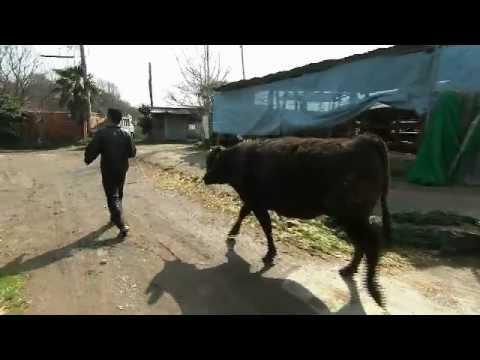 神戸ビーフの魅力-中西牧場 中西義徳さん・仁さん