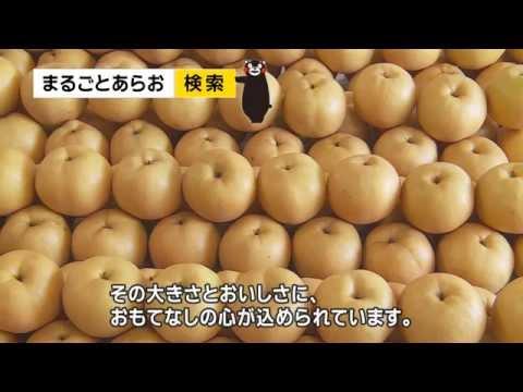 荒尾のジャンボなおもて梨 Arao Nashi Jumbo Pears