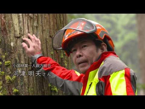 九州イイモノがたり「小国杉」