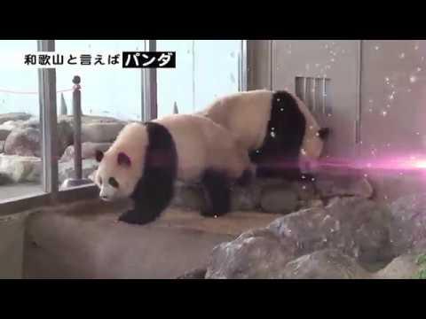 和歌山県PR動画 和-nagomi-(なごみ)和歌山