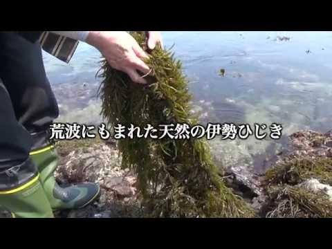 CGCプライム 伊勢産 芽ひじき、長ひじき