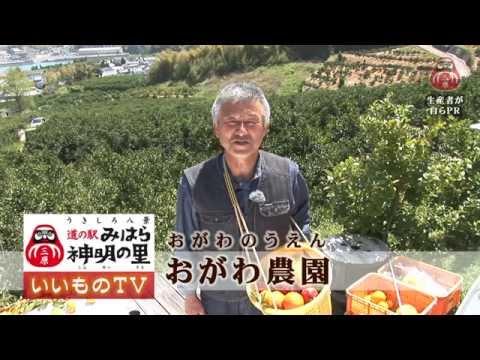 【おがわ農園】~29種類(31品種)の柑橘!!~