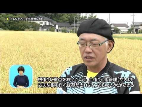 県政テレビ番組あきたびじょん++【秋田米新ブランド登場!】