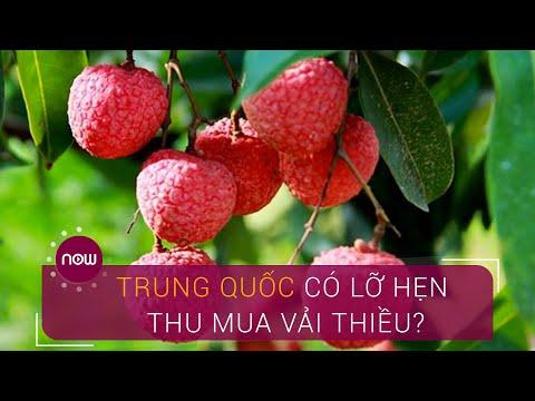 Vải thiều chín đỏ, Trung Quốc có lỡ hẹn thu mua? | VTC Now