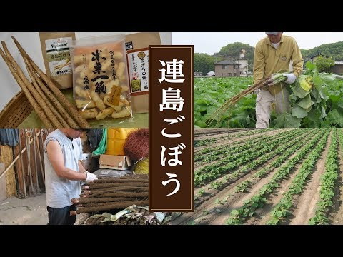 24 Tsurajima Gobou