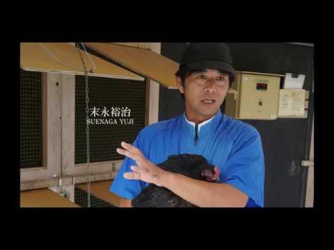 長州黒かしわ Chosyu Kurokashiwa