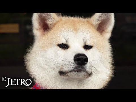 【JETRO】秋田犬と枝豆の魅力を世界へ ‐インバウンドと輸出に地域資源を活かす‐