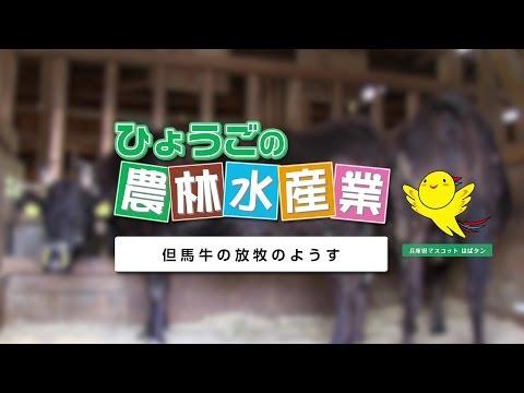農林水産業副読本視聴覚教材 10『但馬牛の放牧のようす』