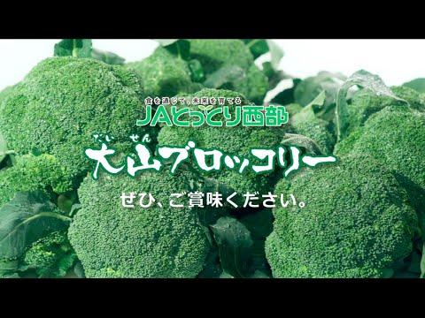大山ブロッコリー「キラリとっとり大山ブロッコリー」JAとっとり西部 Daisen broccoli