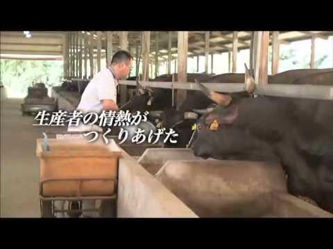 畜産のまち都城「都城和牛」.wmv