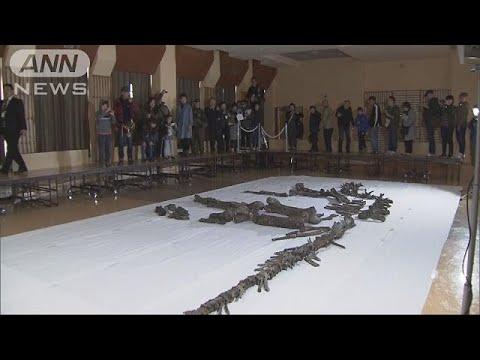 国内最大の恐竜「むかわ竜」の全身骨格を一般公開(18/11/11)
