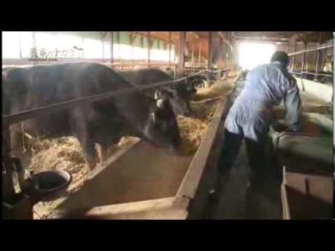 農業のチカラ第1回 「十勝の和牛を知る」