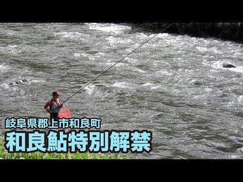 和良鮎特別解禁(2015年6月6日)