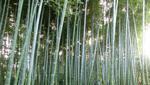 京都 vol.2 地域ブランド・商標登録
