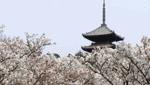 商標登録insideNews:「京法衣」が地域団体商標に登録 京都市内53社組合、ブランド発信強化へ 京都新聞