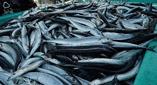 商標登録insideNews: 「さんま焼き師」商標化 岩手、ブランド力高め発信(岩手日報) – Yahoo!ニュース