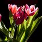 第31類 生花