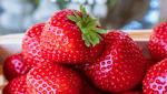 商標登録insideNews: 改正種苗法が成立 高級品種の流出防止、来年4月施行(時事通信) | Yahoo!ニュース